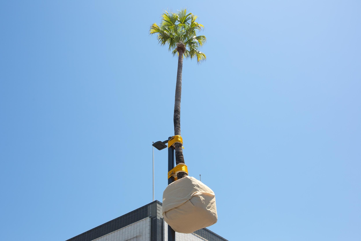 Mike Hewson: Palm pole - Crown Street Mall, Wollongong